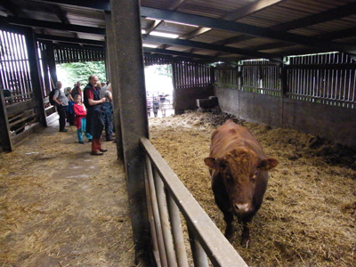 Corringdon Farm Visit