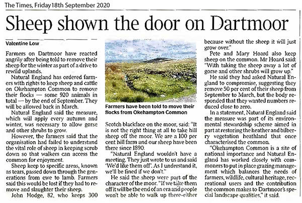 Sheep shown the door on Dartmoor